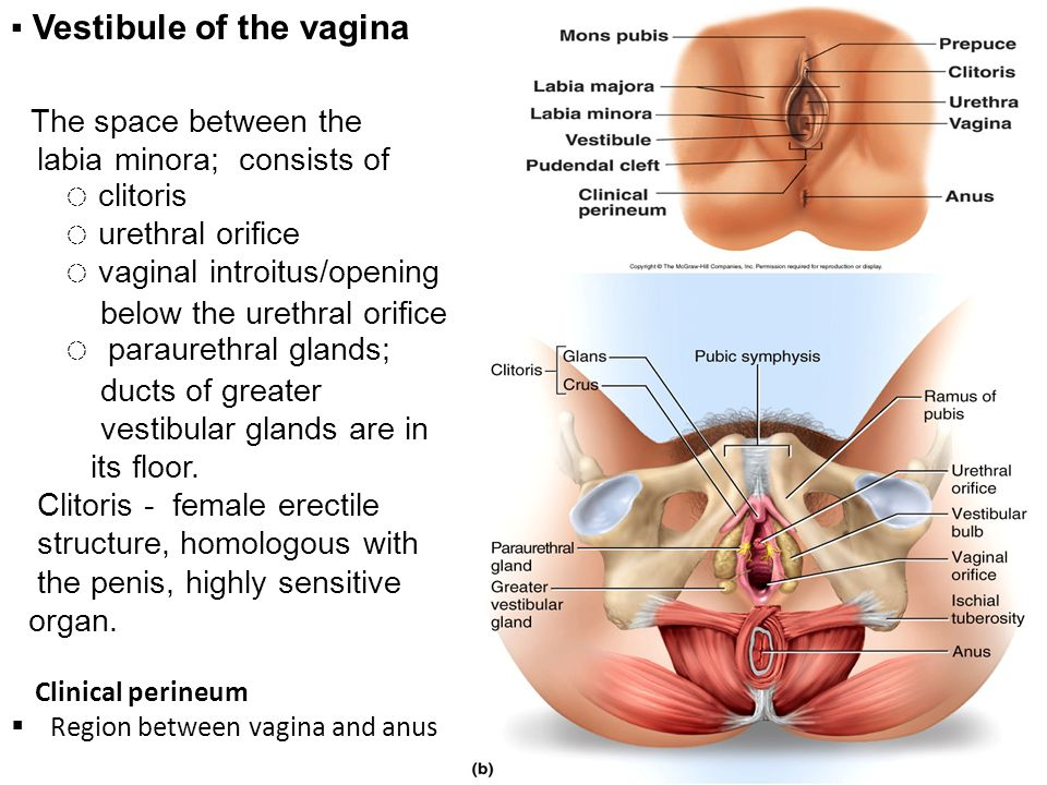 space between and rectum vagina