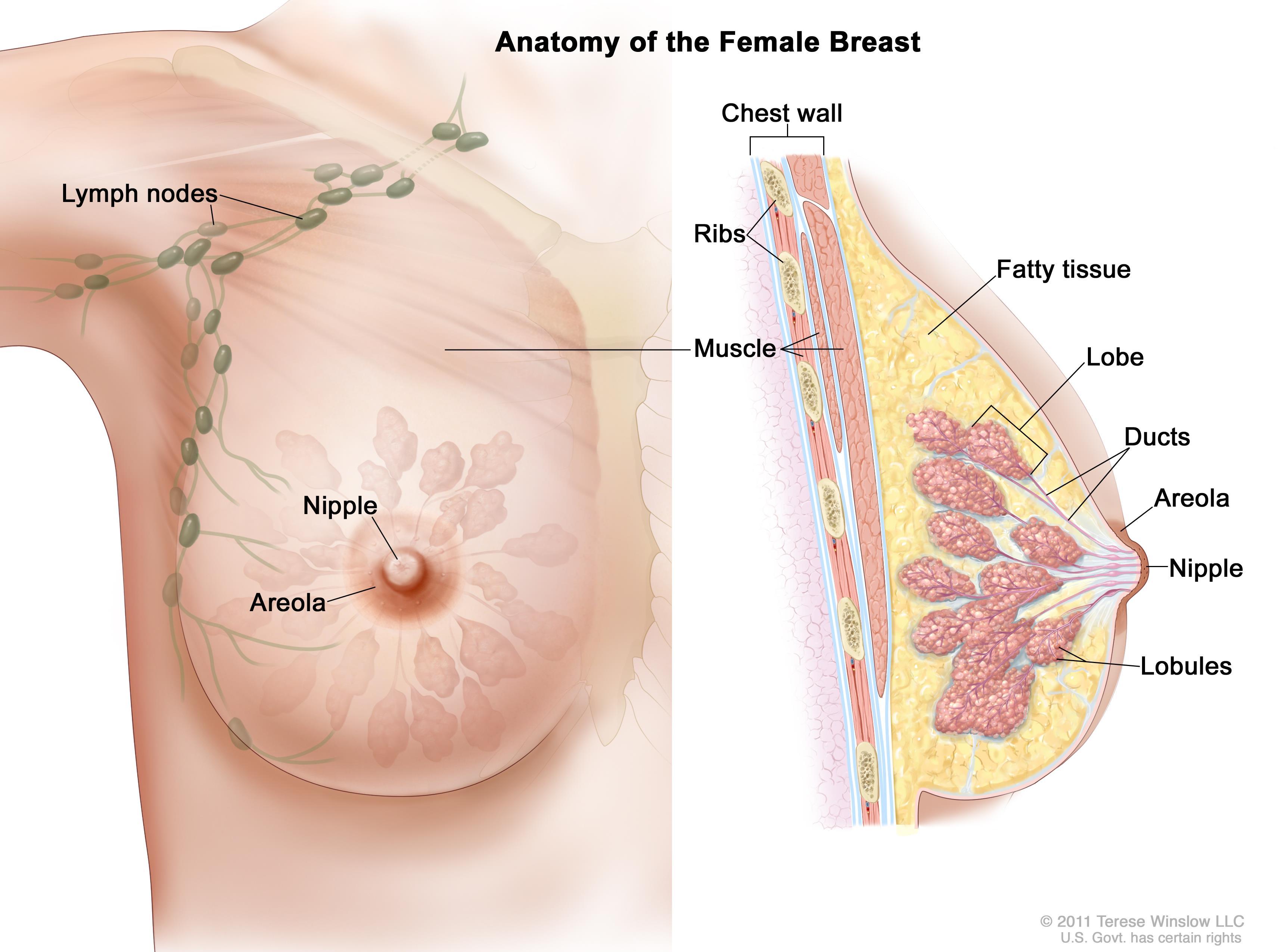 cancer breast late and pregnancy