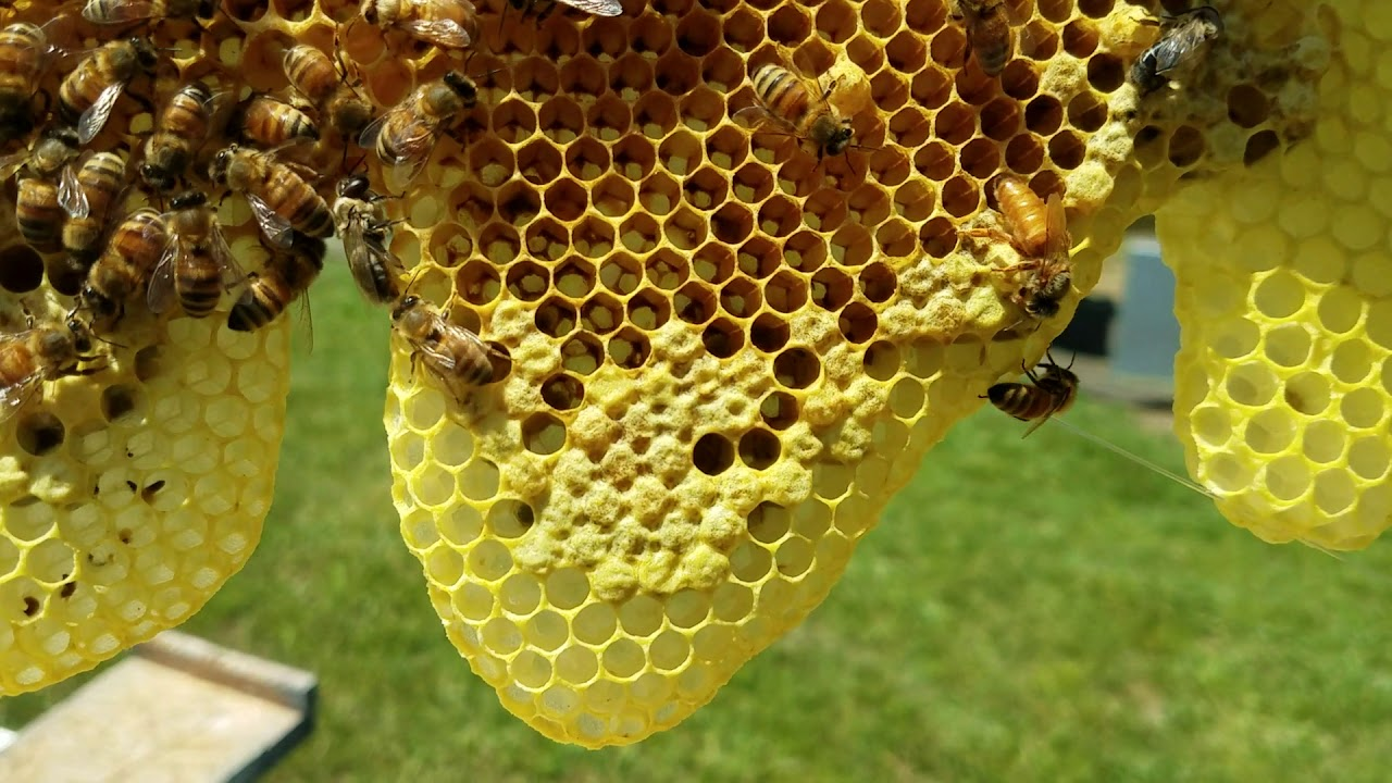 virgin queen in installing hive nuc