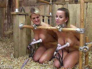 free trainer porn bondage