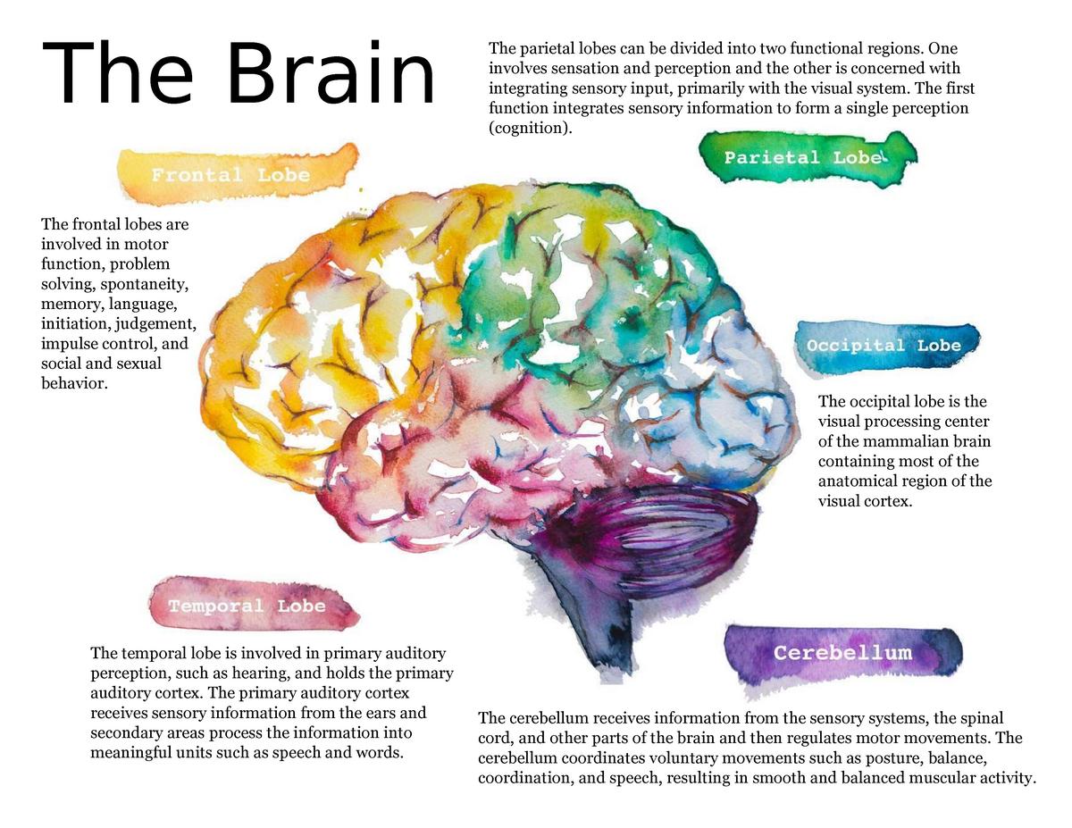 of center brain sexual