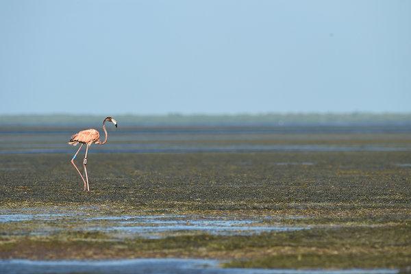 flamingo miami porn