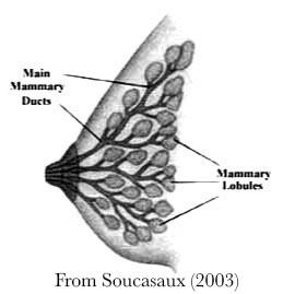 photos growth hormones transexual breast
