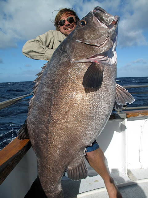 ass bass big